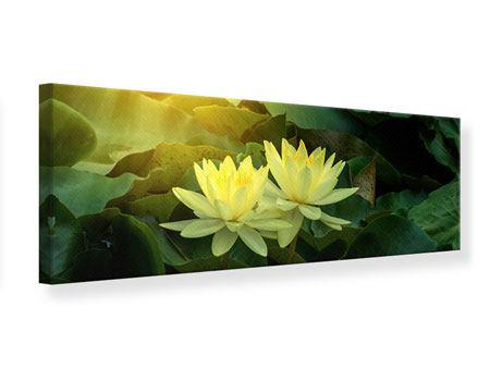 Leinwandbild Panorama Wilde Lotus