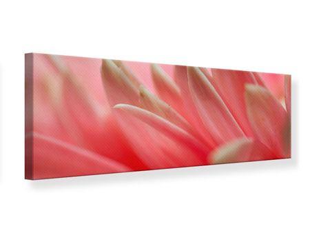 Leinwandbild Panorama Close Up einer Blüte