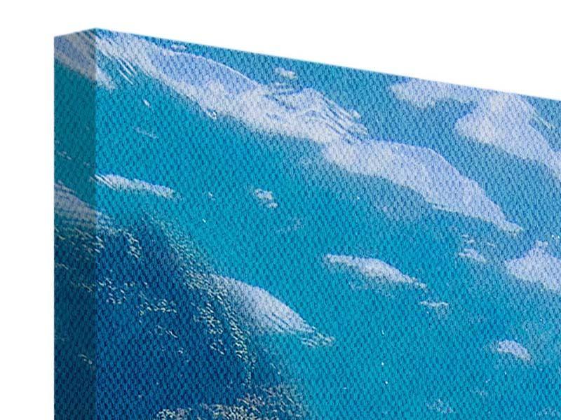 Leinwandbild Panorama Die Wasserschildkröte