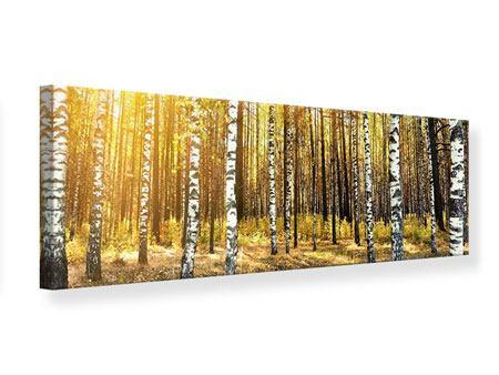 Leinwandbild Panorama Birkenwald