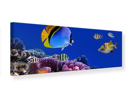 Leinwandbild Panorama Welt der Fische