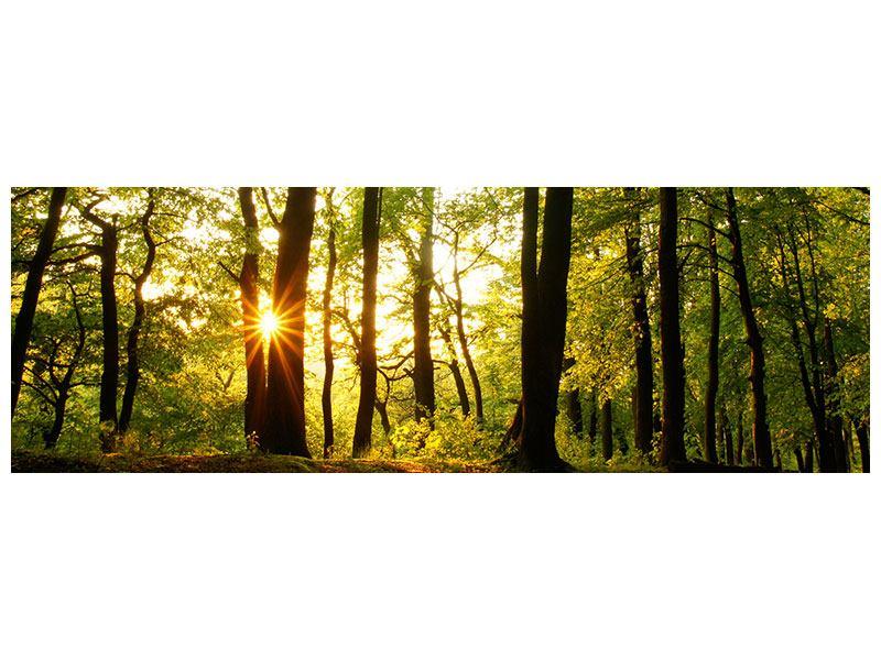 Leinwandbild Panorama Sonnenuntergang zwischen den Bäumen