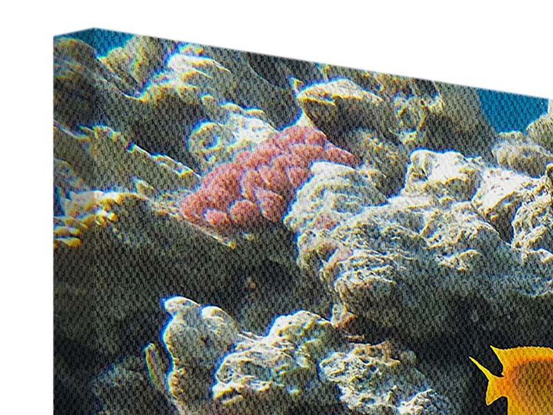 Leinwandbild Panorama Das Aquarium