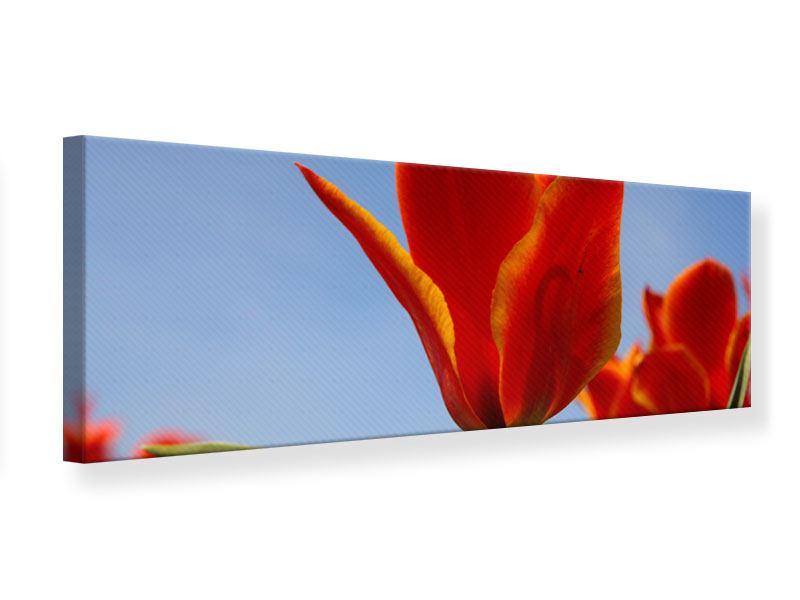 Leinwandbild Panorama Rote Tulpen in XXL