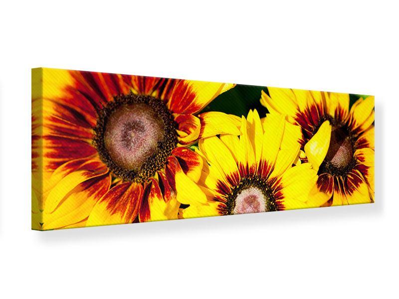 Leinwandbild Panorama Reife Sonnenblumen