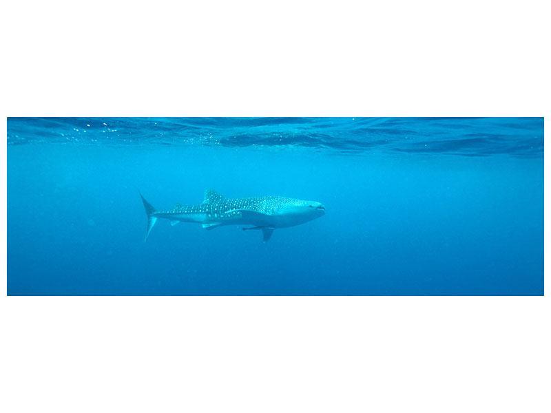 Leinwandbild Panorama Der Walhai