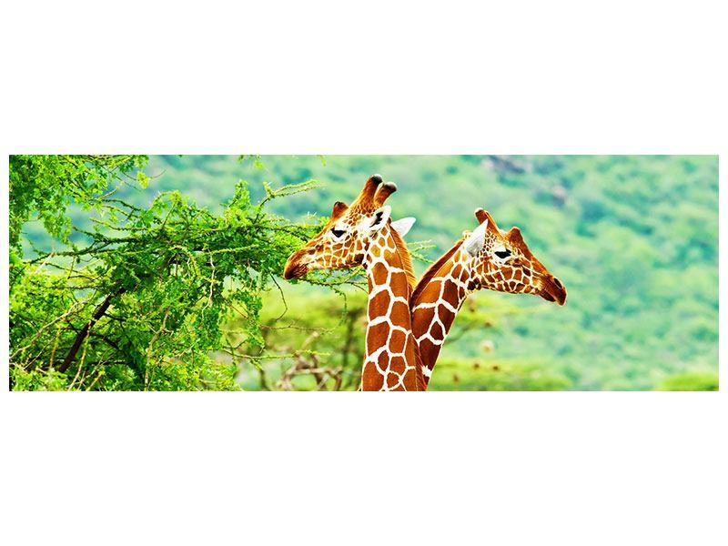 Leinwandbild Panorama Giraffenliebe
