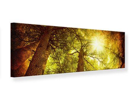 Leinwandbild Panorama Cedar Baum