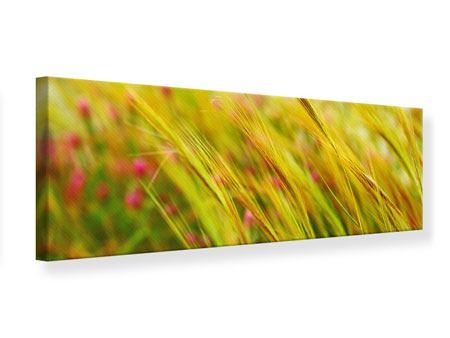 Leinwandbild Panorama Das Weizenfeld