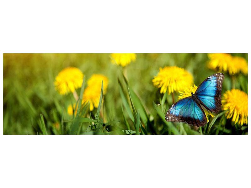 Leinwandbild Panorama Der Löwenzahn und der Schmetterling