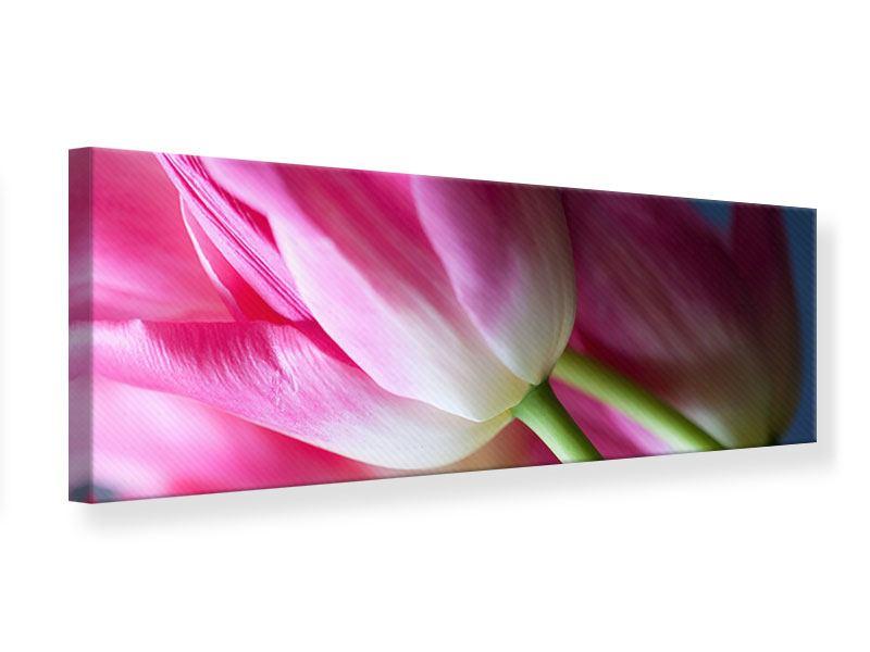 Leinwandbild Panorama Makro Tulpen