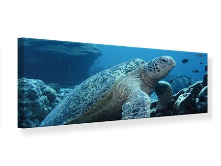 Leinwandbild Panorama Die Meeresschildkröte