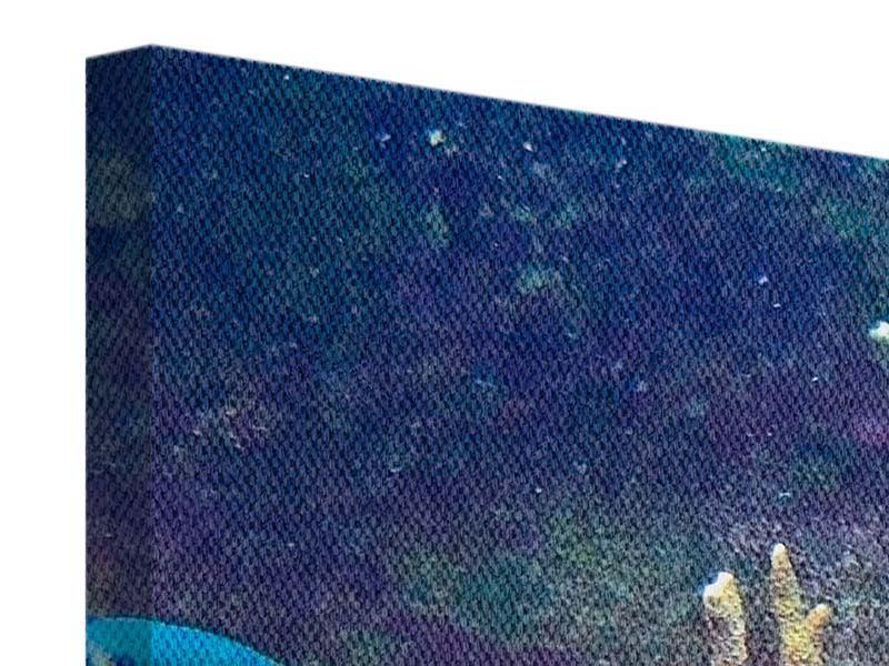 Leinwandbild Panorama Fische