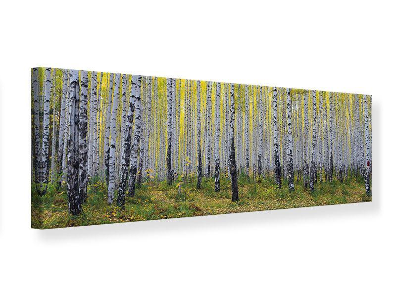 Leinwandbild Panorama Herbstlicher Birkenwald
