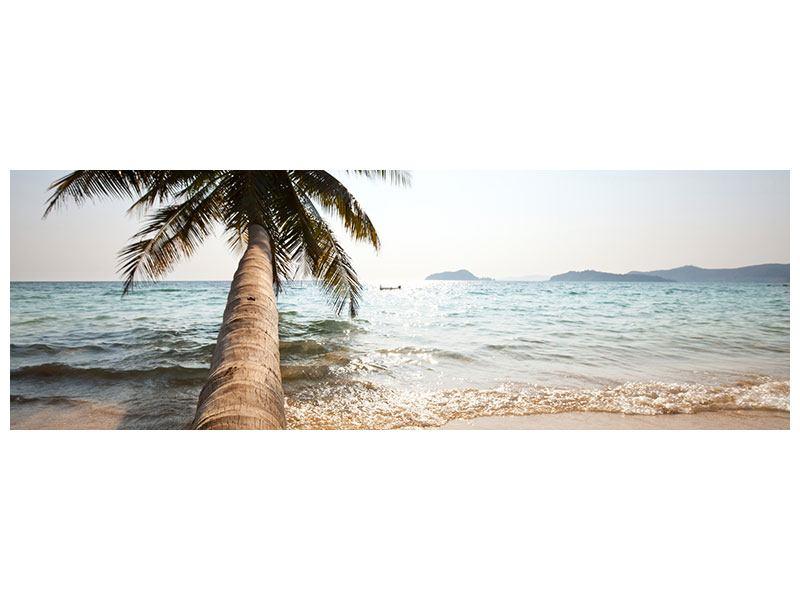 Leinwandbild Panorama Palme