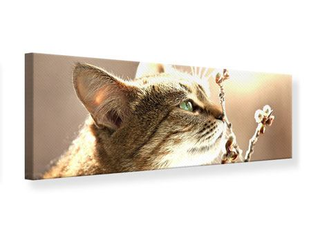 Leinwandbild Panorama Die Katze
