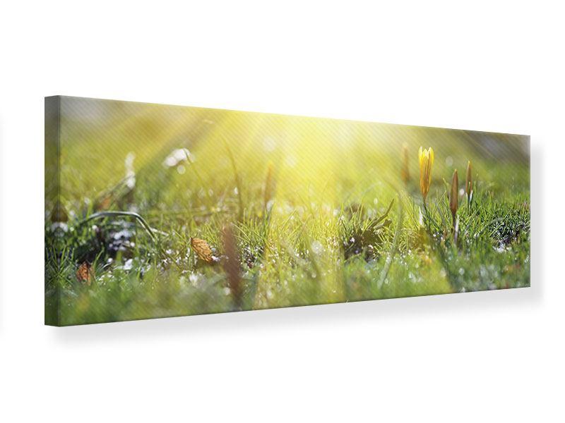 Leinwandbild Panorama Blumige Wiese