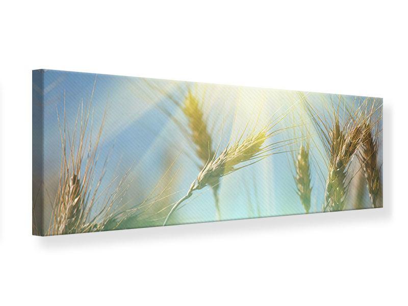 Leinwandbild Panorama König des Getreides