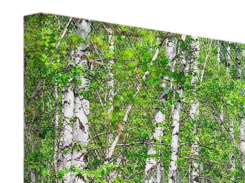 Leinwandbild Panorama Der Birkenwald
