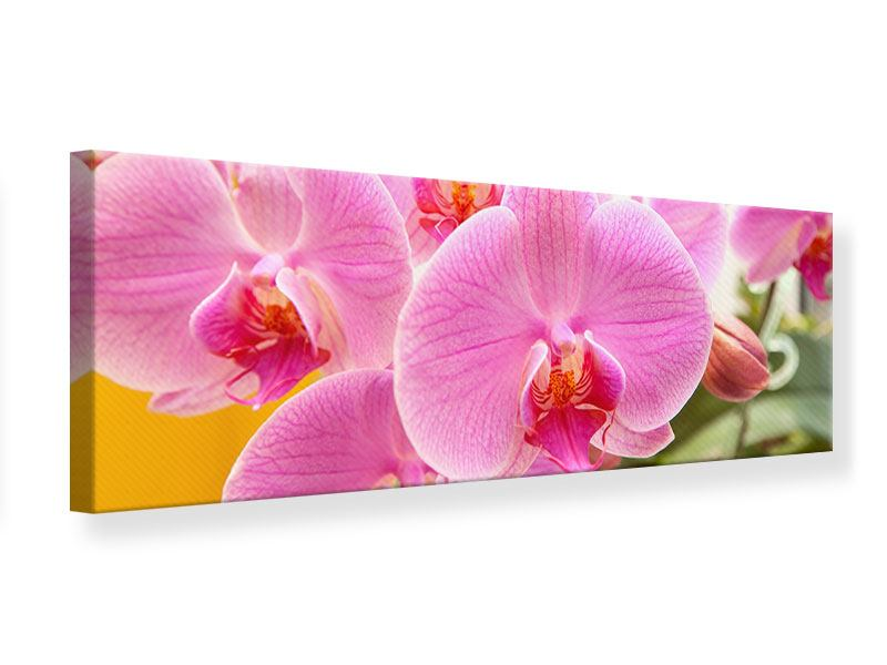 Leinwandbild Panorama Königliche Orchideen