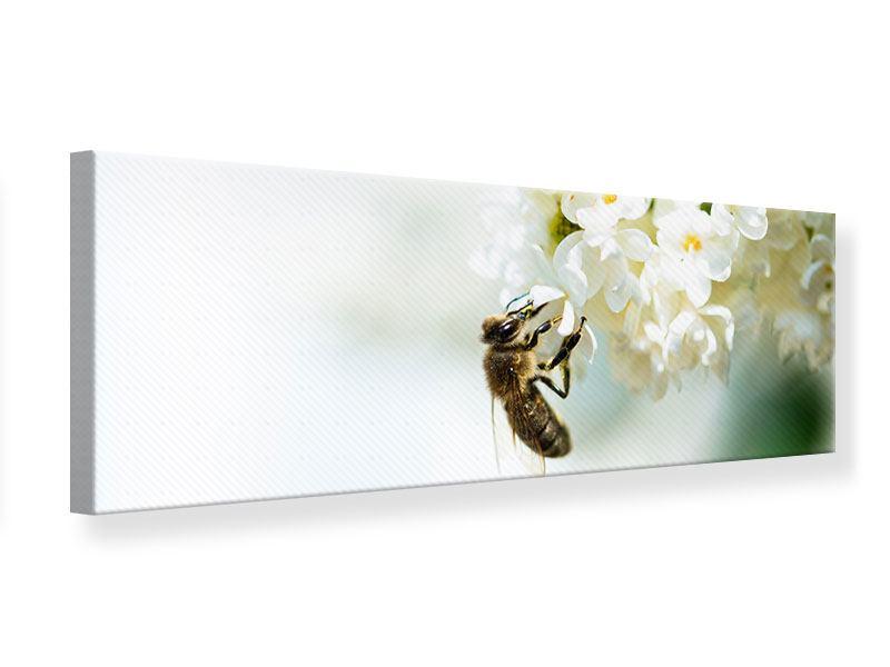 Leinwandbild Panorama Die Hummel und die Blüte