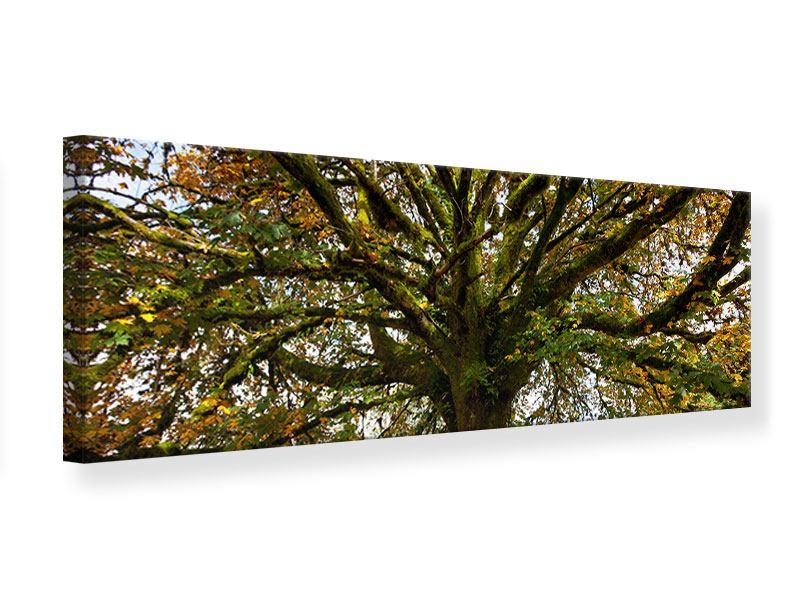 Leinwandbild Panorama Mein Lieblingsbaum