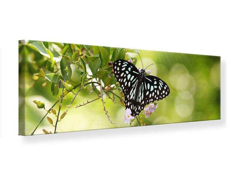 Leinwandbild Panorama Papilio Schmetterling XXL