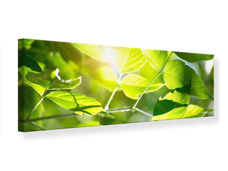Leinwandbild Panorama Es grünt so grün