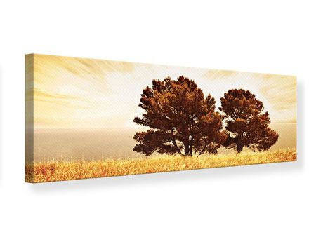 Leinwandbild Panorama Bäume im Lichtspektakel