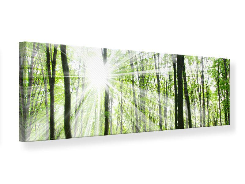 Leinwandbild Panorama Magisches Licht in den Bäumen