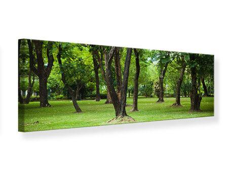 Leinwandbild Panorama Kirschbaum-Garten