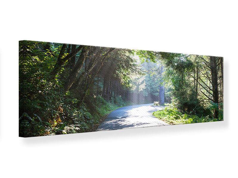 Leinwandbild Panorama Sonniger Waldweg
