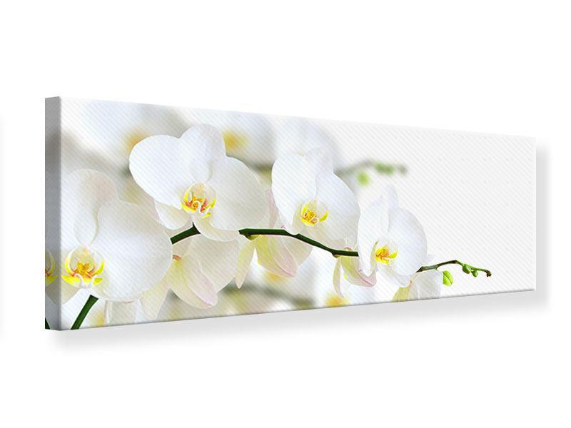 Leinwandbild Panorama Weisse Orchideen