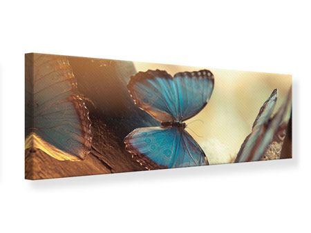 Leinwandbild Panorama Schmetterlinge