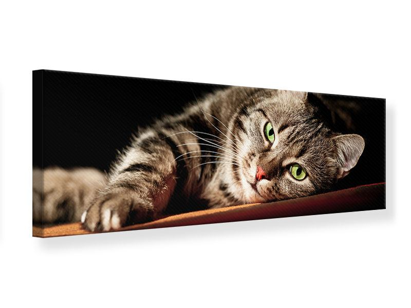 Leinwandbild Panorama Entspannte Katze
