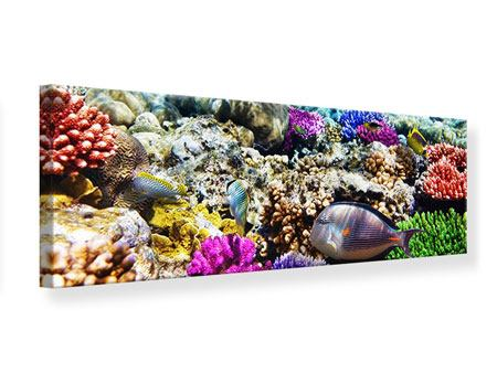 Leinwandbild Panorama Fischaquarium
