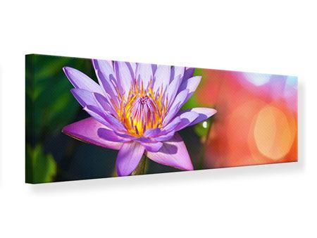 Leinwandbild Panorama Colored Lotus