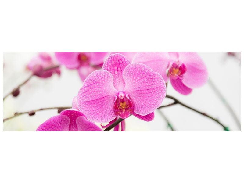 Leinwandbild Panorama Das Symbol der Orchidee