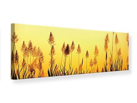 Leinwandbild Panorama Die Blumen des Feldes