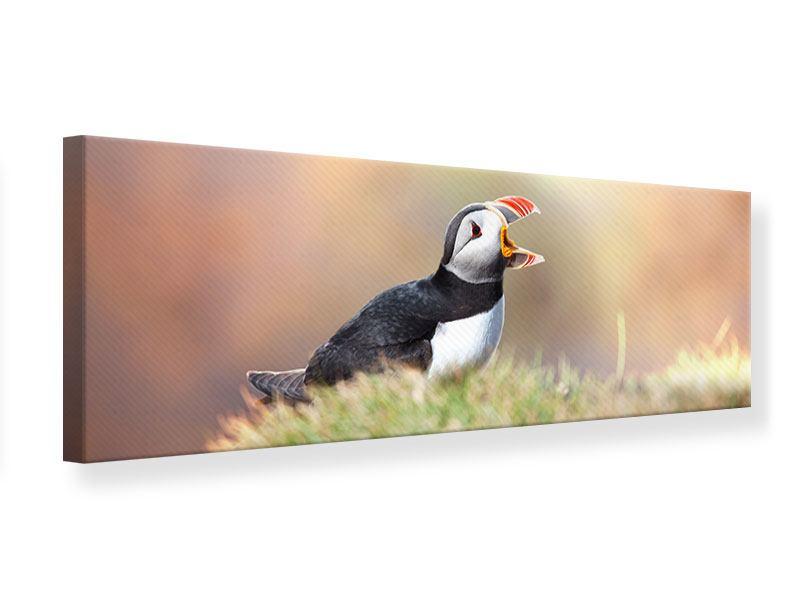 Leinwandbild Panorama Der Papageitaucher