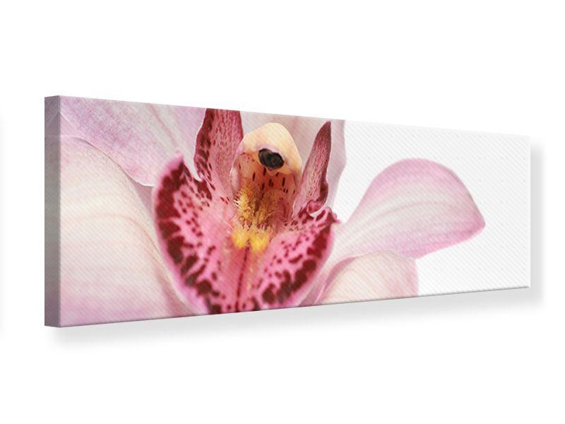 Leinwandbild Panorama Orchideenblüte XXL