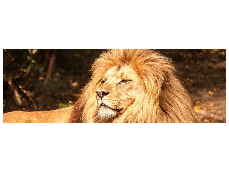 Leinwandbild Panorama Löwe
