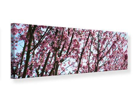 Leinwandbild Panorama Japanische Blütenkirsche