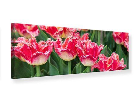 Leinwandbild Panorama Die Tulpenwiese