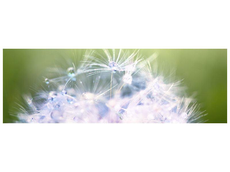 Leinwandbild Panorama Pusteblume XL im Morgentau
