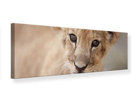 Leinwandbild Panorama Löwenbaby