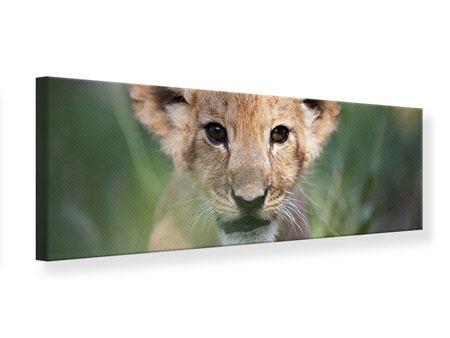 Leinwandbild Panorama Das Löwenbabay