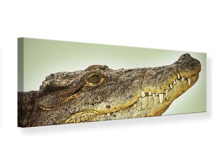 Leinwandbild Panorama Close Up Alligator