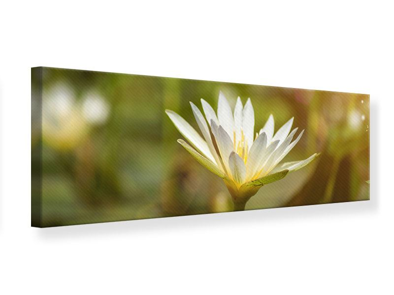 Leinwandbild Panorama Lilien-Lichtspiel