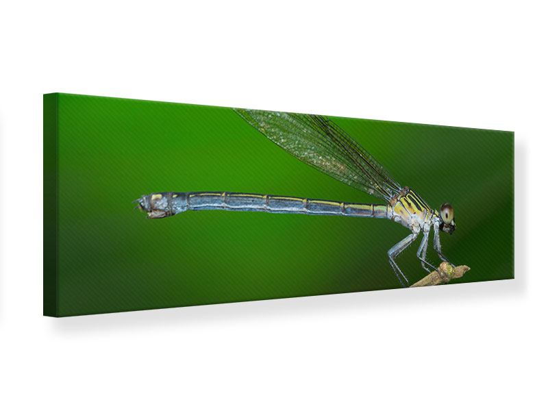 Leinwandbild Panorama Die Libelle